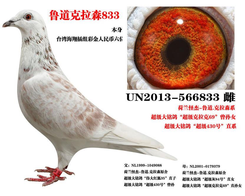 本鸽获:台湾海翔三关插组彩金人民币96万