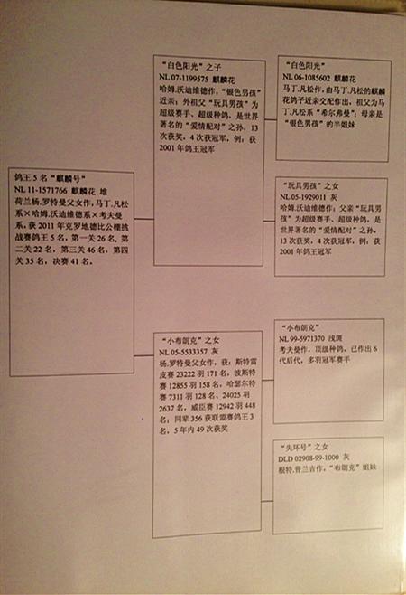 翻译书图片