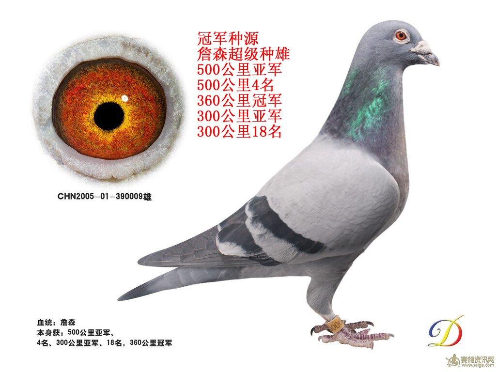 鸽 名: 詹森冠军种源                羽 色: 灰                眼图片