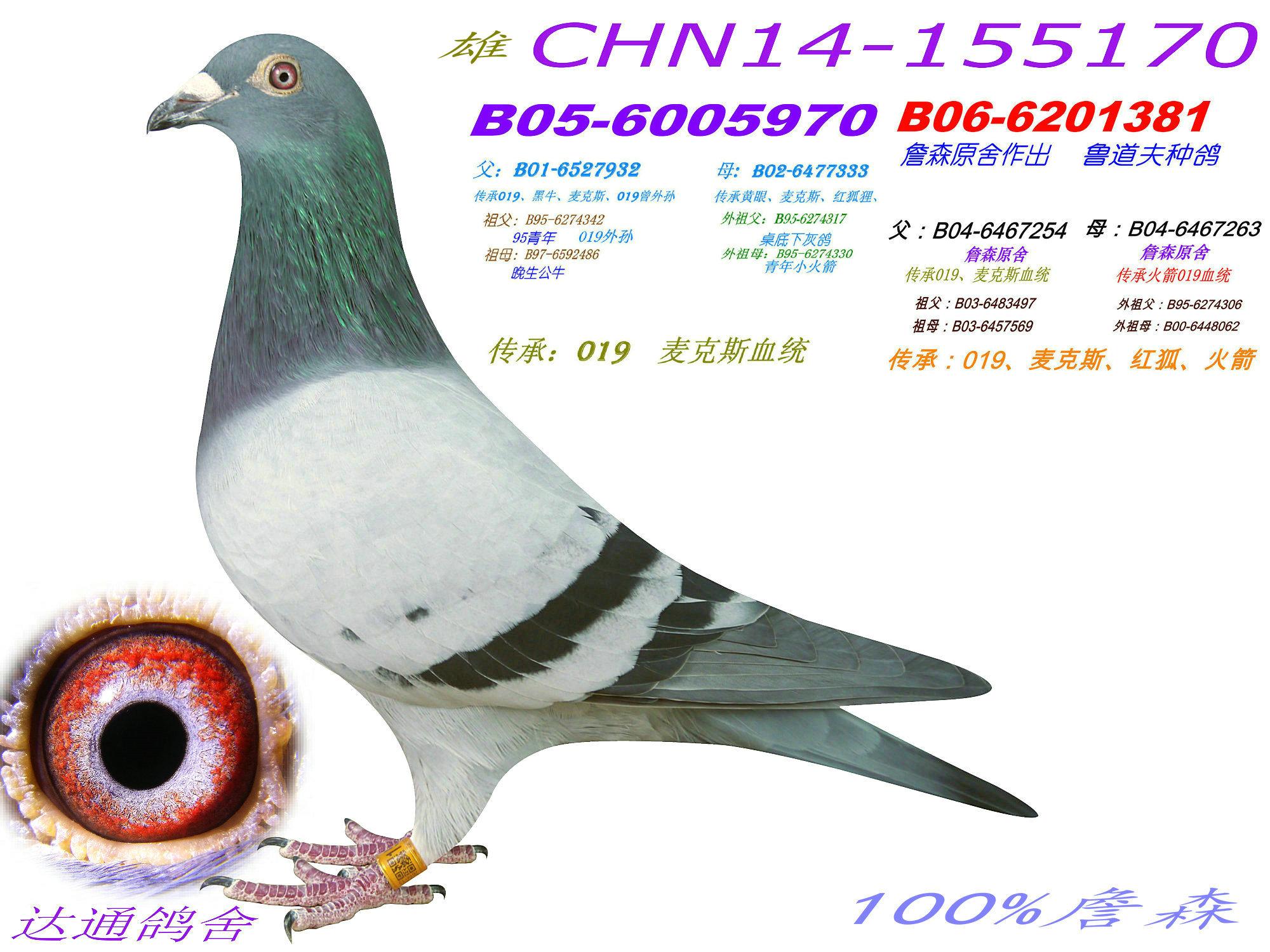 动物 鸽 鸽子 教学图示 鸟 鸟类 2000_1500