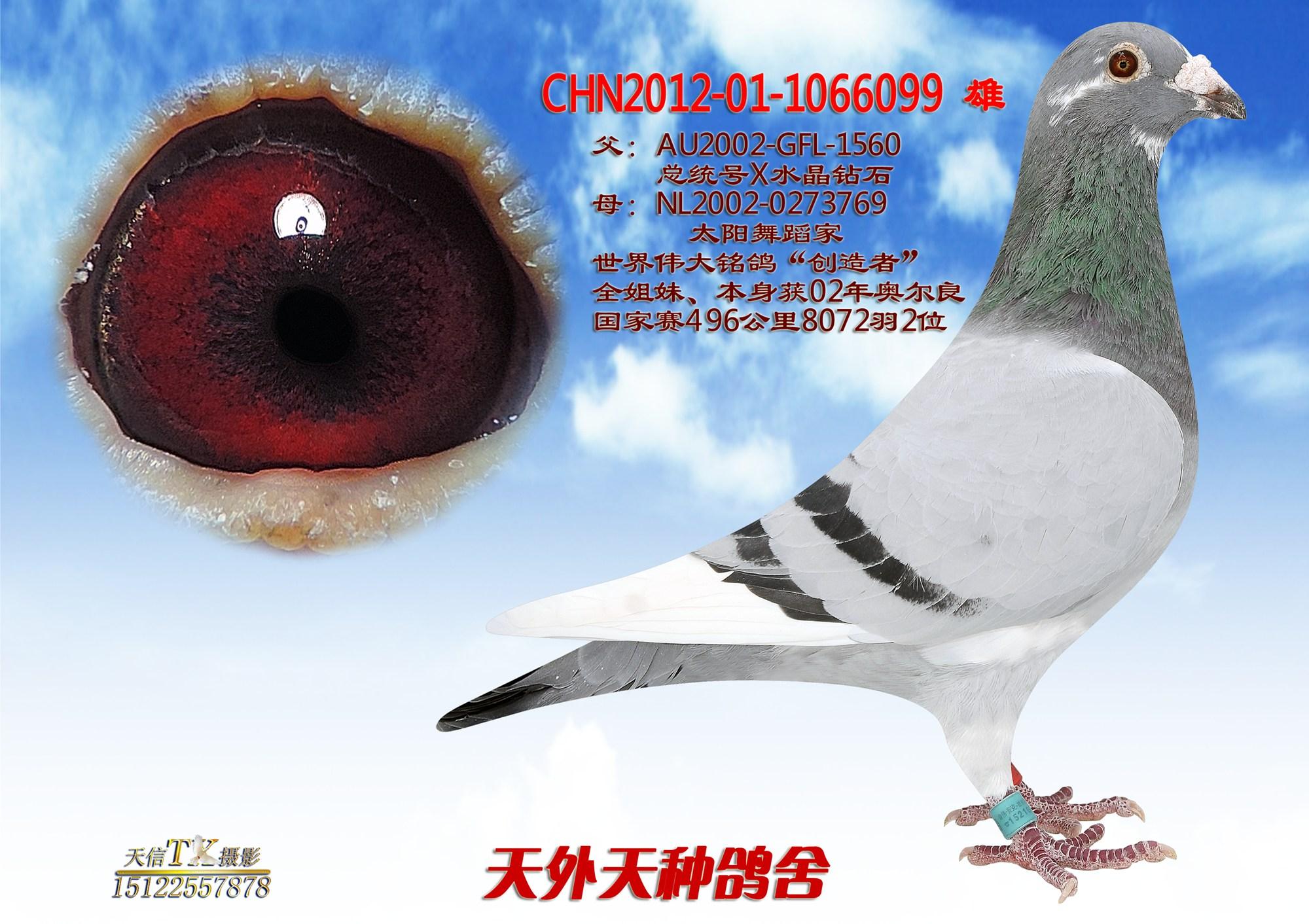 鸟类鸽小学动物图示鸟青蛙2000_1412教学教材解剖鸽子的中国科学家图片