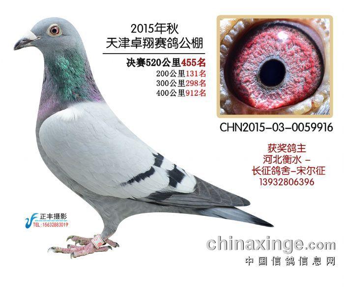 卓翔455