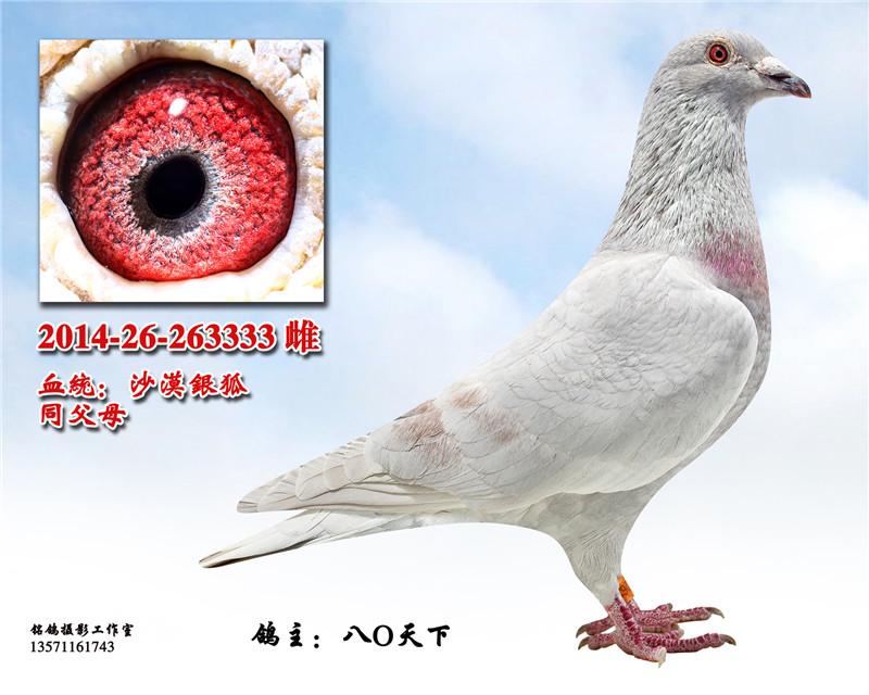 搜鸽网欧洲行视频
