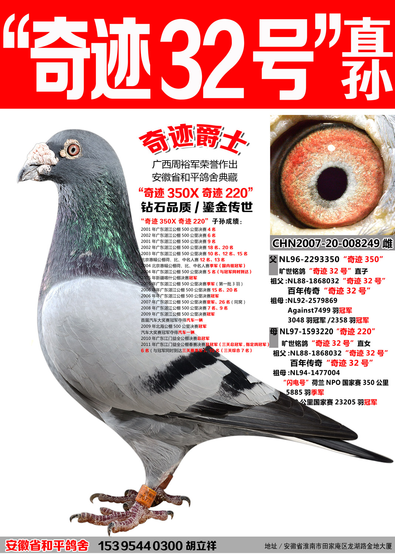 林波尔奇迹32号直孙【奇迹爵士】