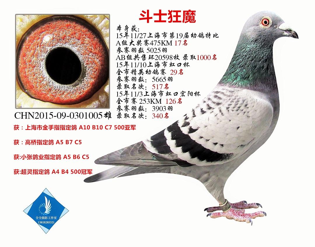 斗士狂魔 上海市特比17名 已转鸽友收藏