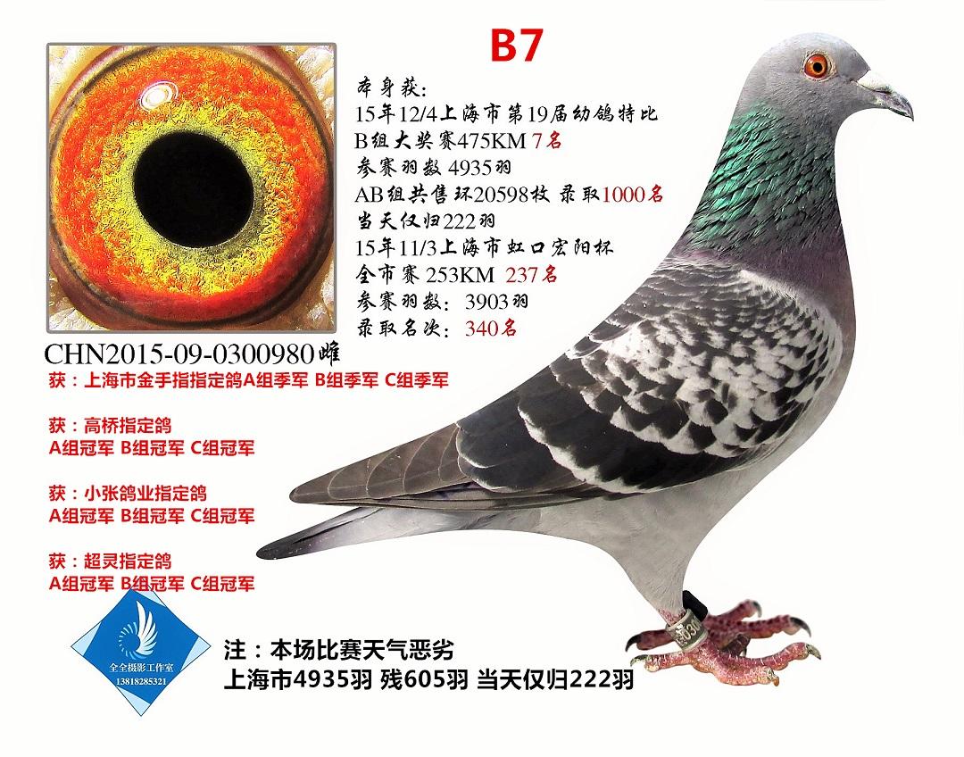 上海市特比B组7名   已转鸽友收藏