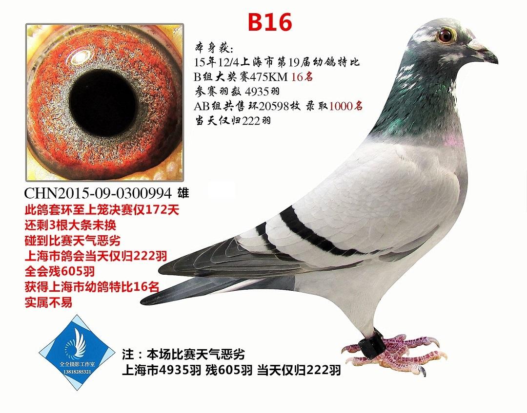上海市特比B组16名   已转鸽友收藏