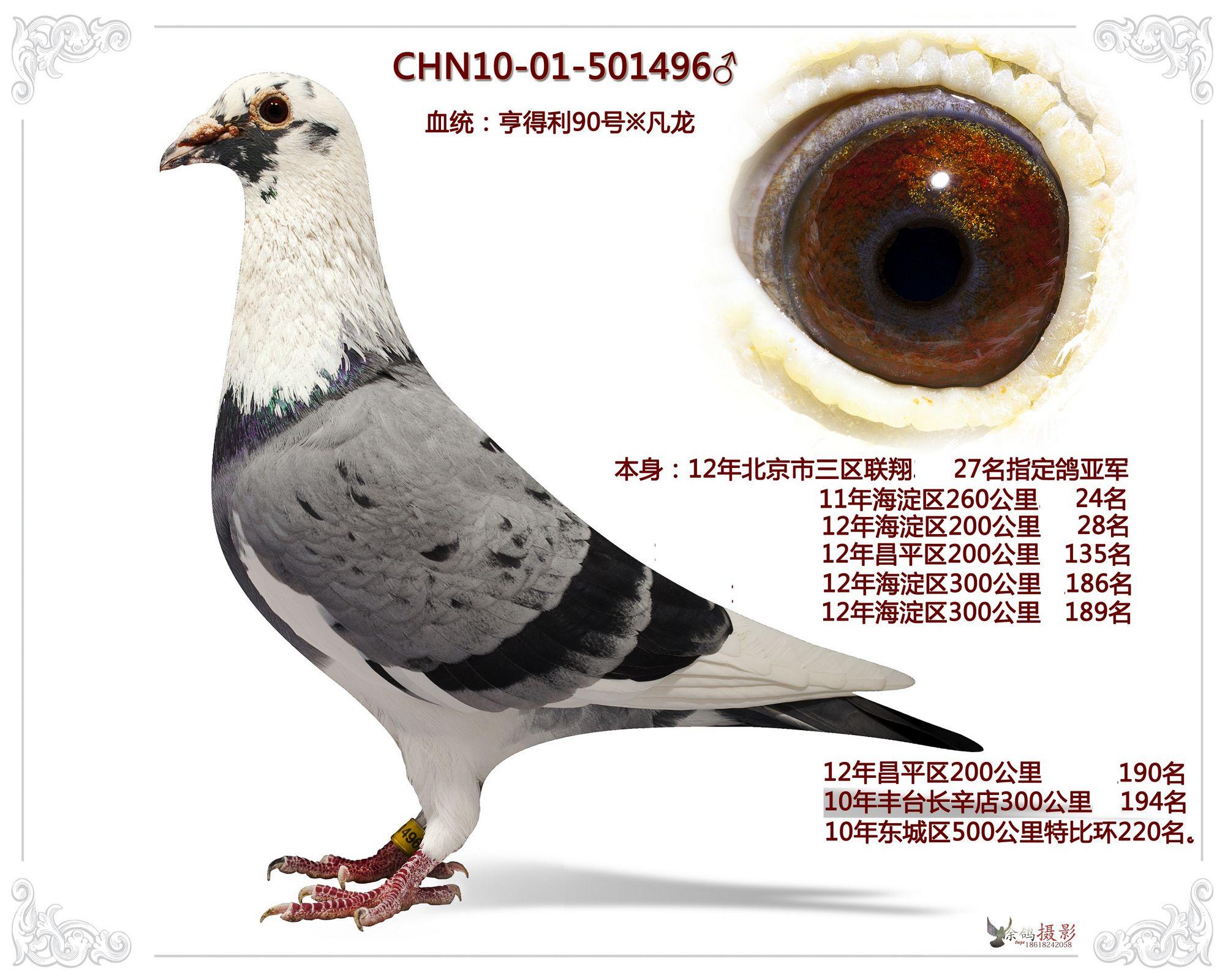 教学鸽青蛙鸽子图示鸟鸟类2000_1600红烧动物的简单做法图片