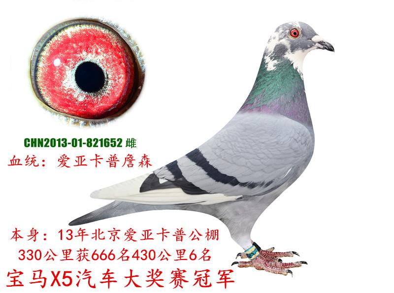 北京爱亚卡普6名宝马X5冠军