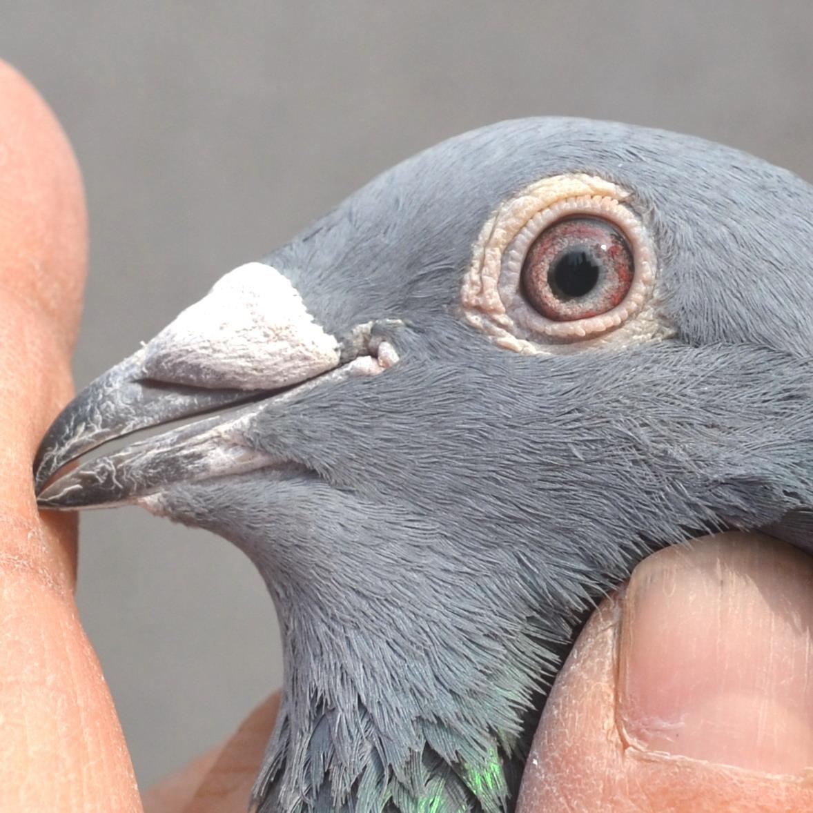 动物的眼睛高清图片