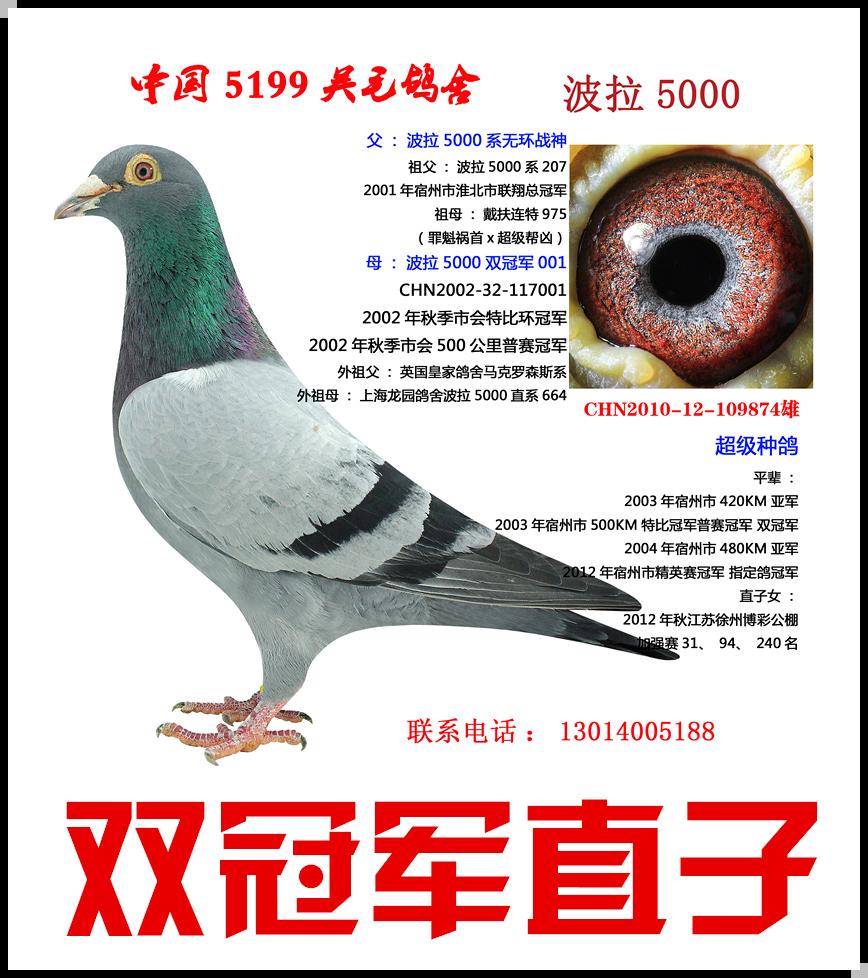 波拉5000-874