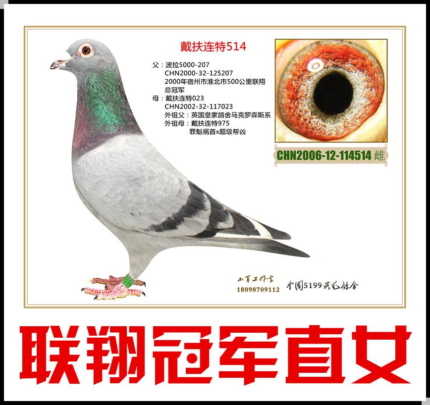 戴扶连特514