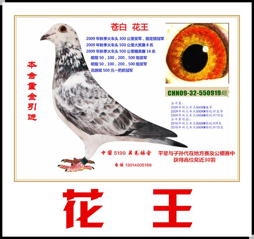 花王(非卖品)