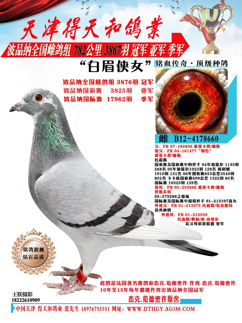 【白眉侠女】波品纳3876羽冠军