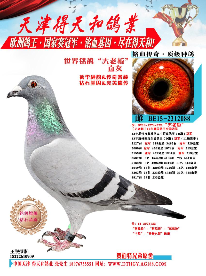 世界铭鸽【大老板】直女 088
