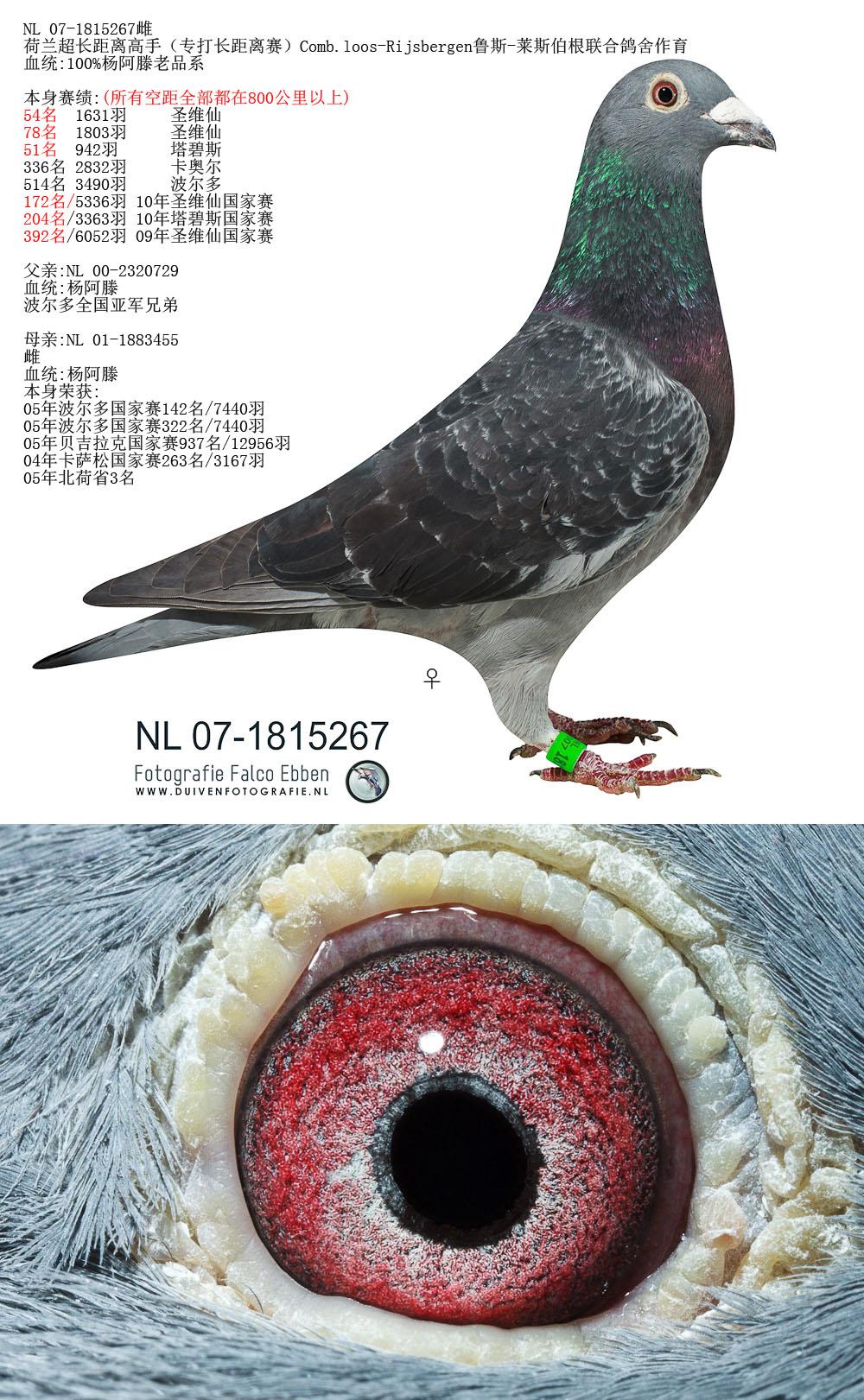 杨阿滕成绩鸽2