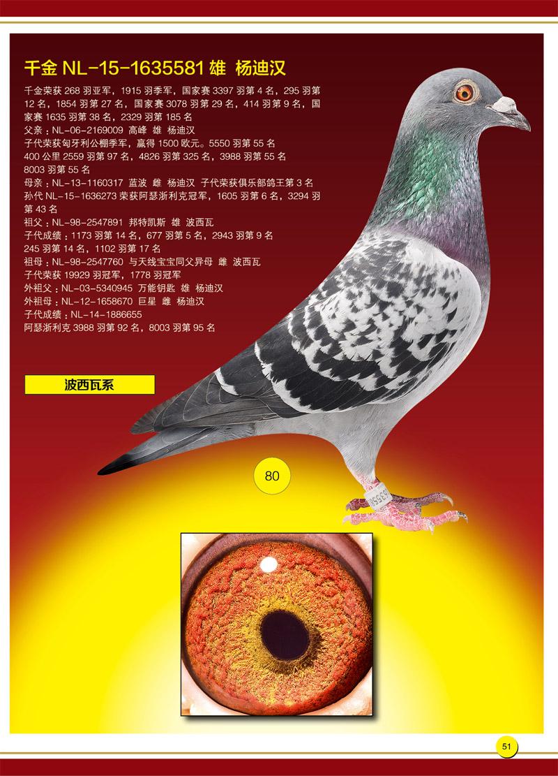 济南蓝岛_济南蓝岛赛鸽总场-中信网爱鸽商城