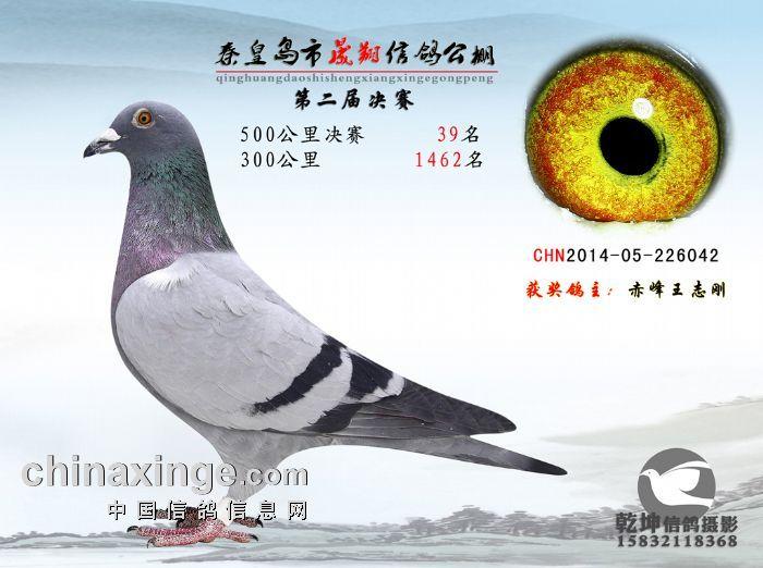 秦皇岛晟翔决赛39