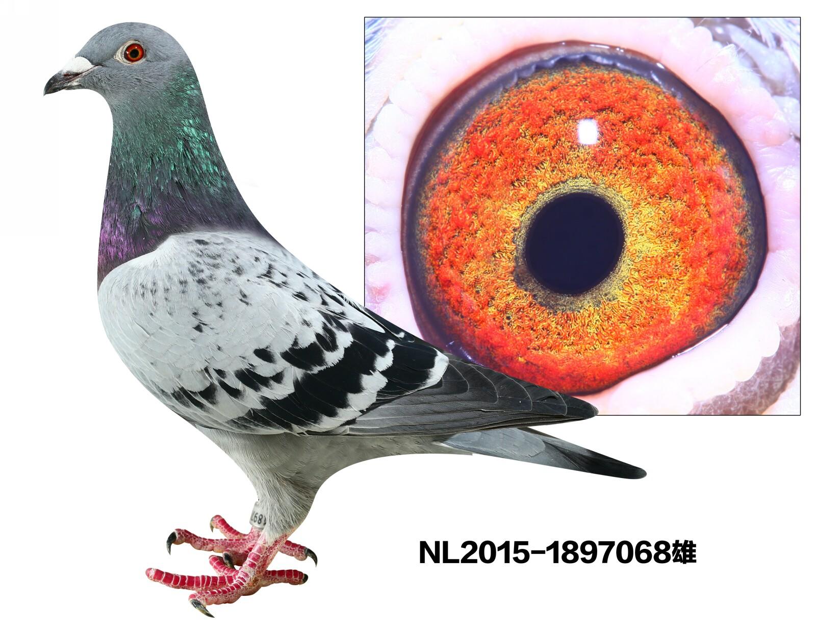 仹�e�nl��$yo��c9ie�(�_nl2015-1897068