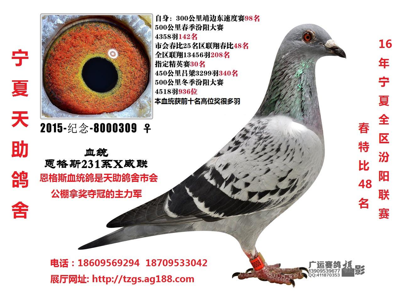 汾阳联赛春特比48名(拍卖会拍出)
