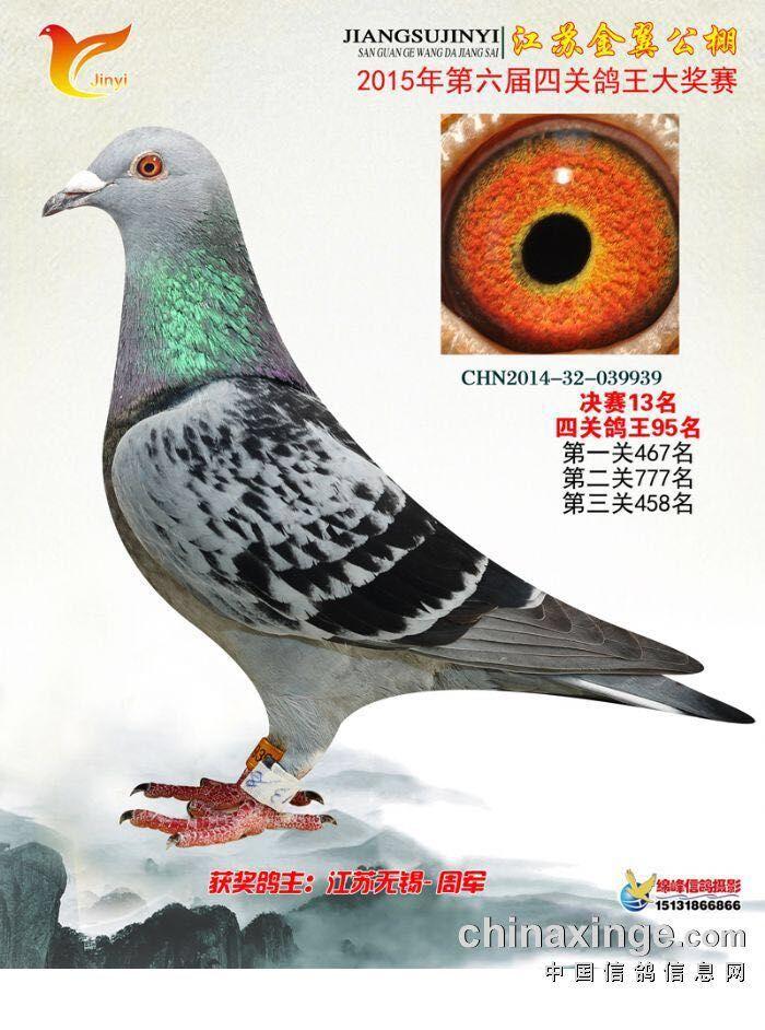 鸟类鸽鸽子鸽子图示鸟动物700_942竖版竖屏怎么教学天落图片
