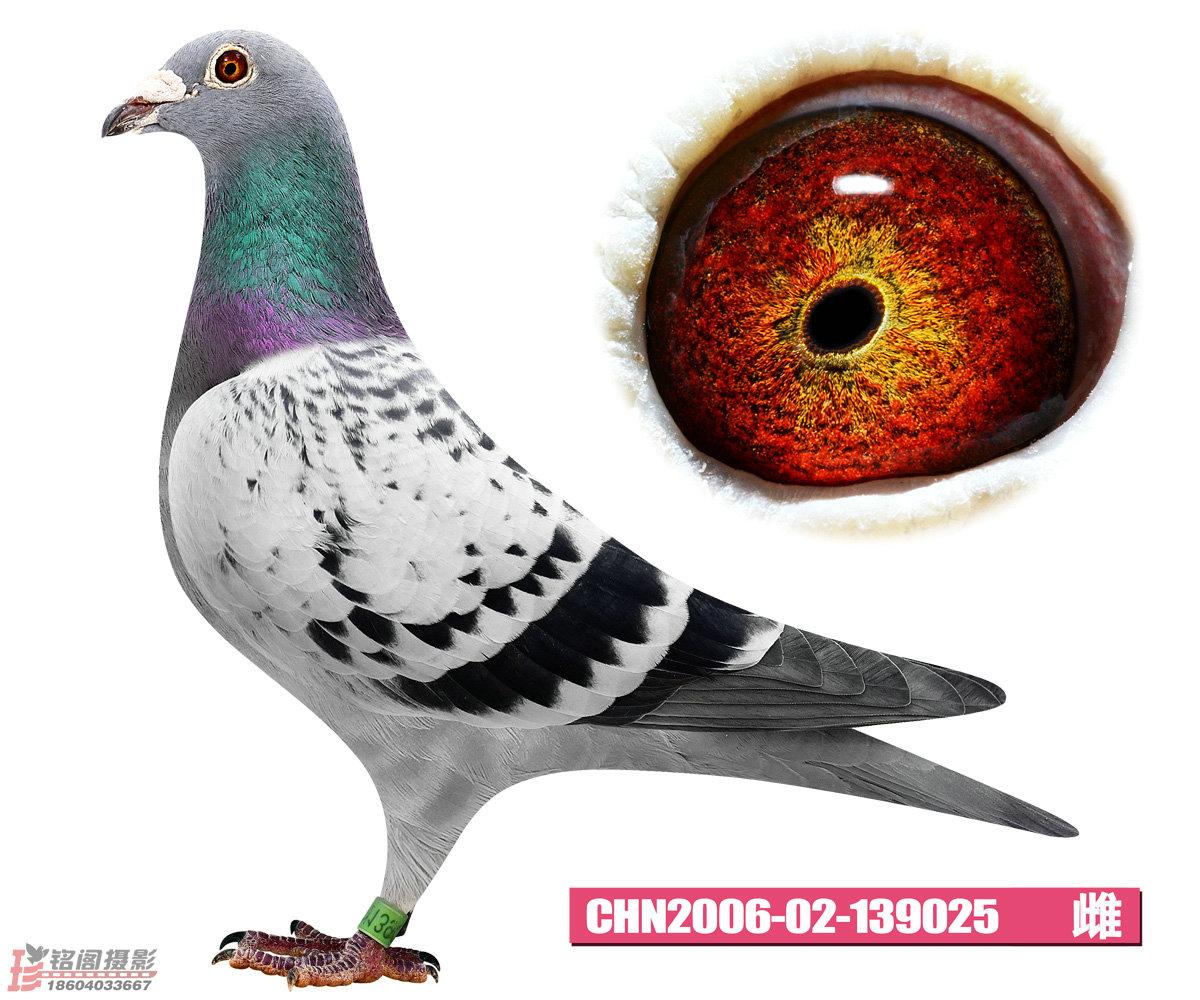 CHN2006-02-139025