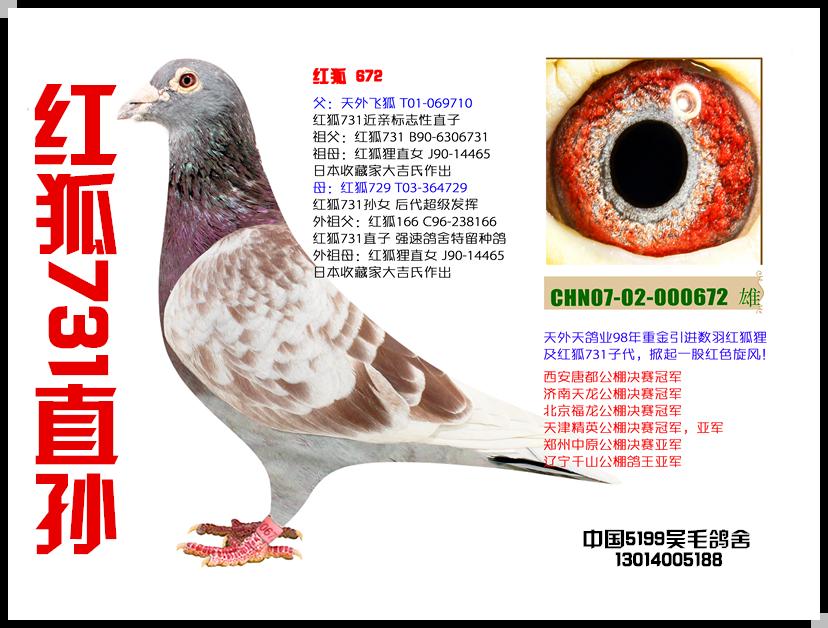 红狐731直孙-672