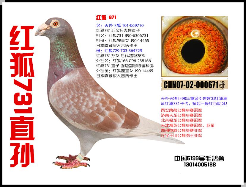 红狐731直孙-671