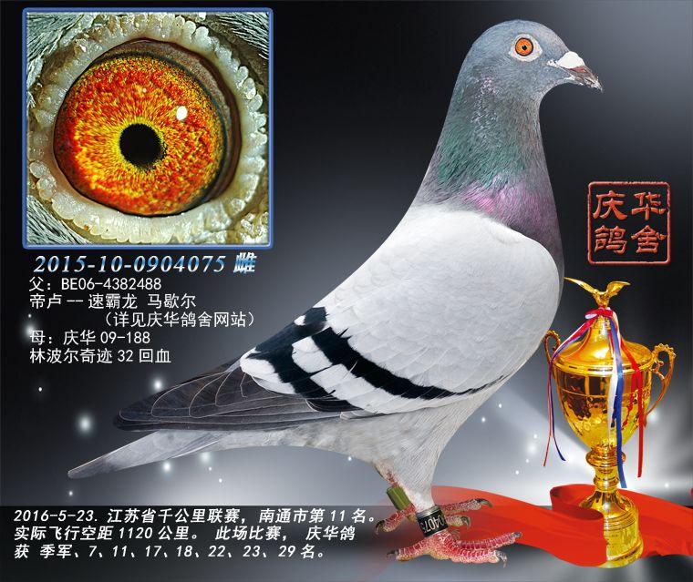 2016江苏省千公里联赛南通市第11名