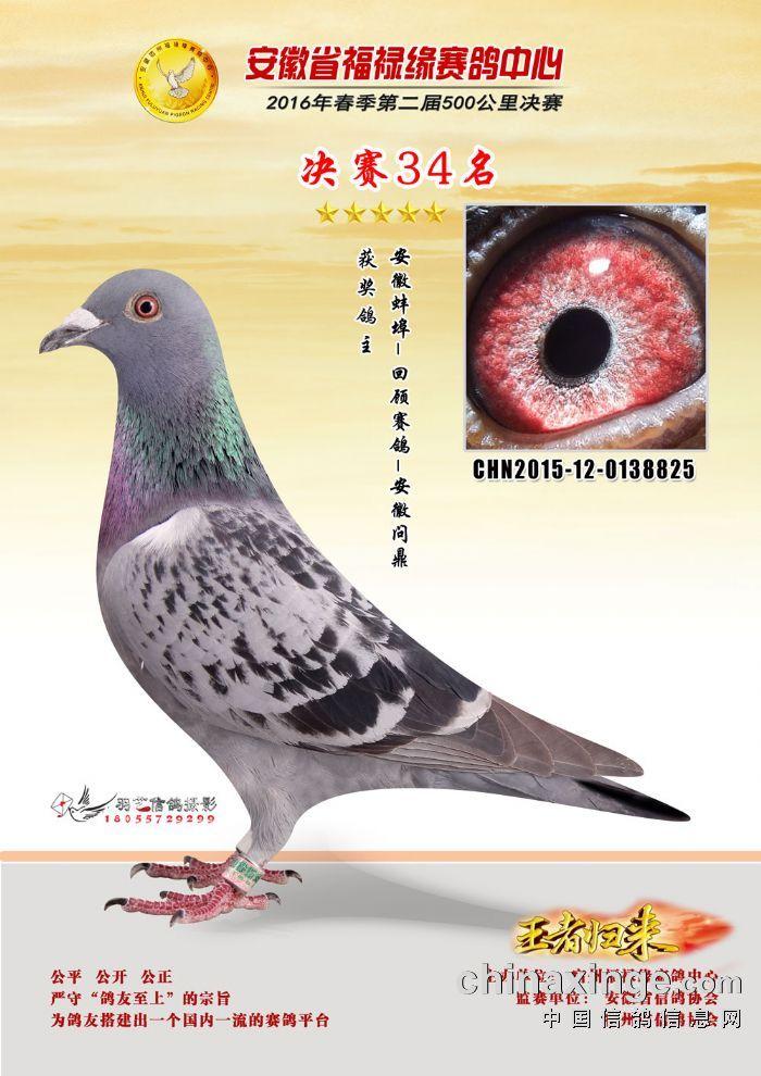 2016年福录缘公棚34名【已出售】