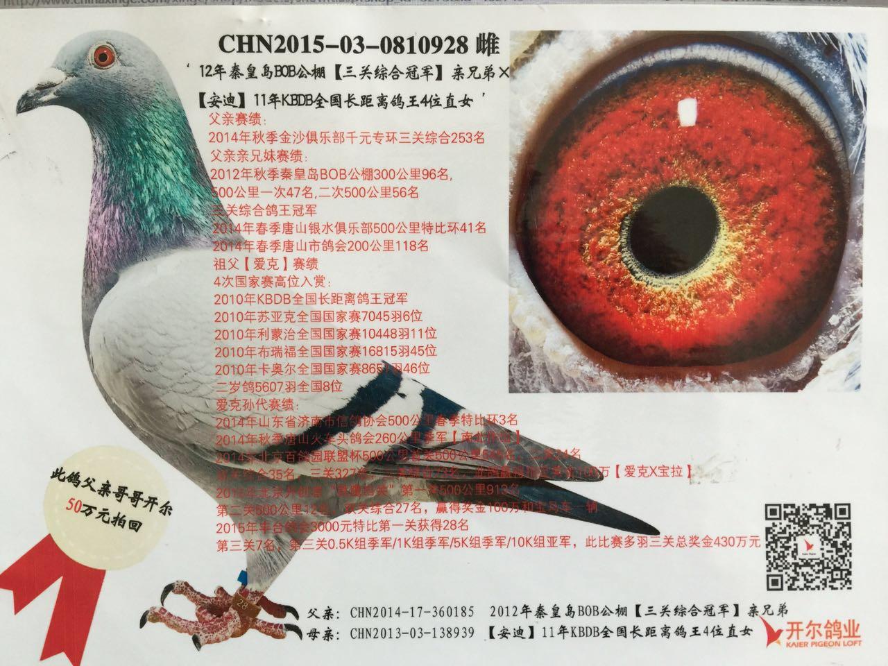 冻品鸽鸽子教学图示鸟蚊子1280_960火锅店鸟类招动物图片