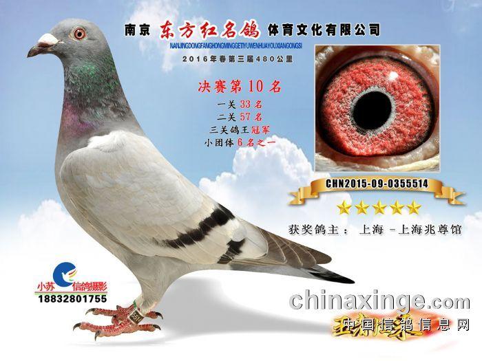 16年春公棚【三关鸽王冠军】