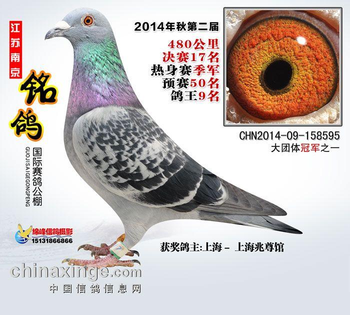 14年江苏铭鸽公棚三关【鸽王9名】