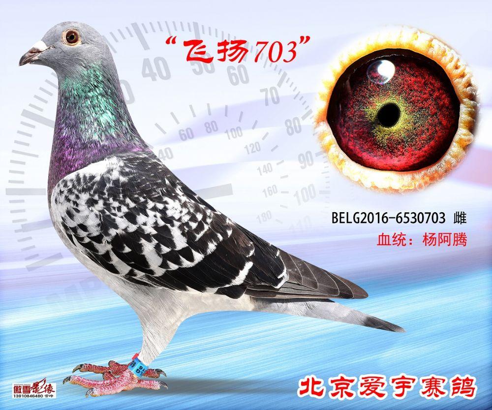 3、BELG2016-6530703-雌副本 (1)
