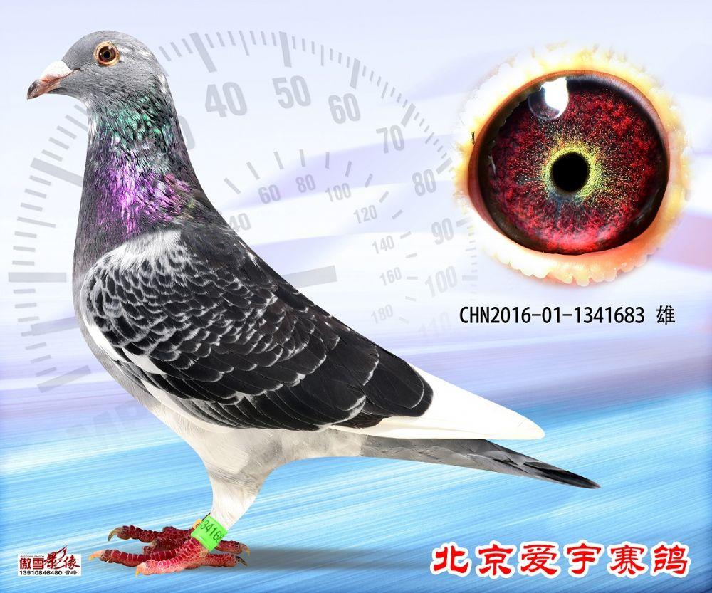 9、CHN2016-01-1341683-雄副本 (1)