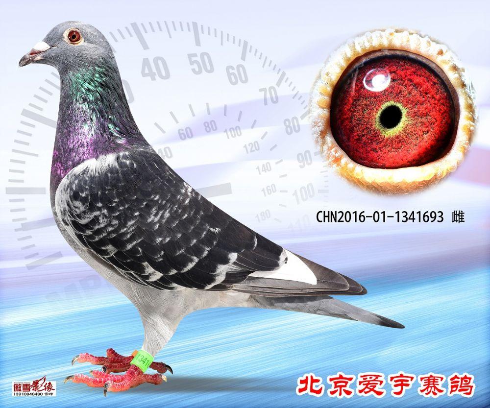 10、CHN2016-01-1341693-雌副本 (1)