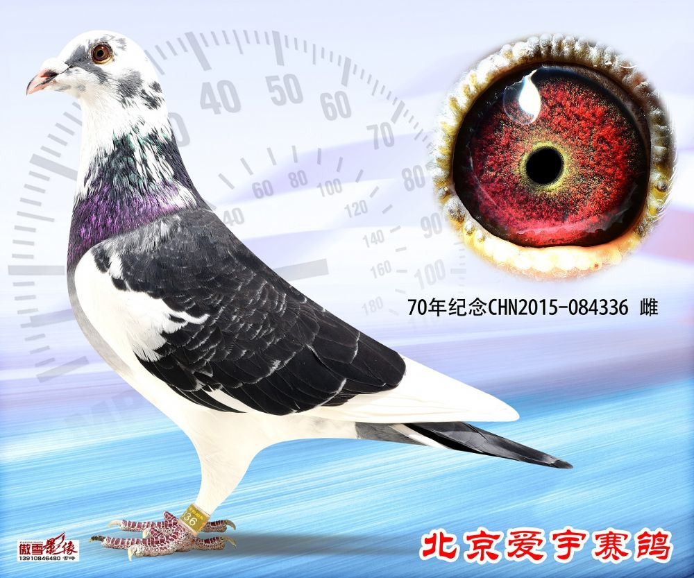 12、抗战胜利70年纪念 CHN2015-084336-雌副本 (1)