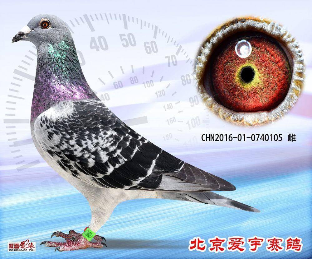 14、CHN2016-01-0740105-雌副本 (1)