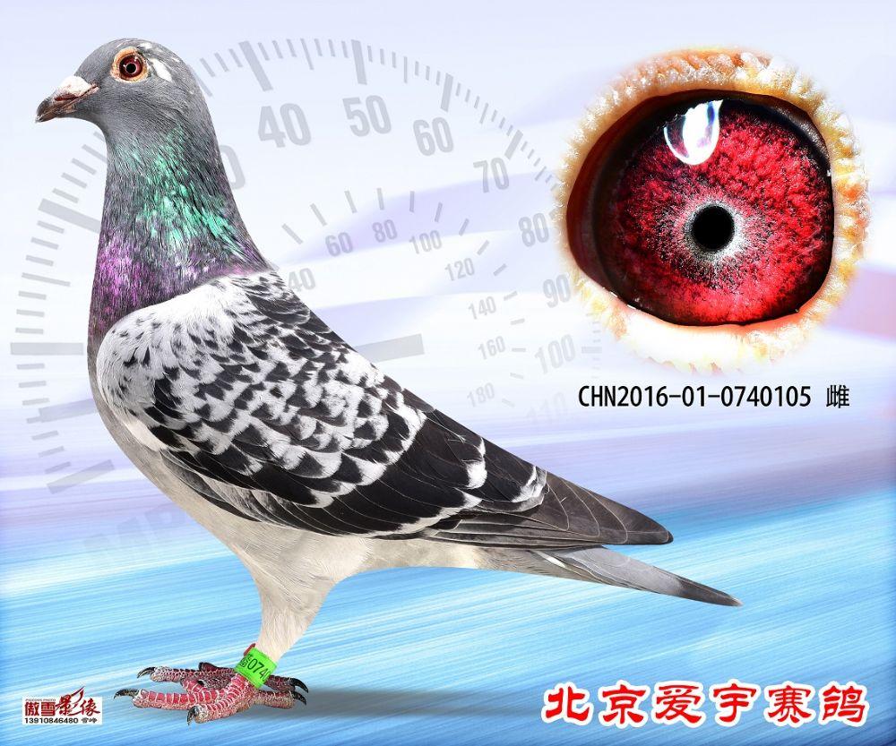15、CHN2016-01-0740105-雌副本 (1)