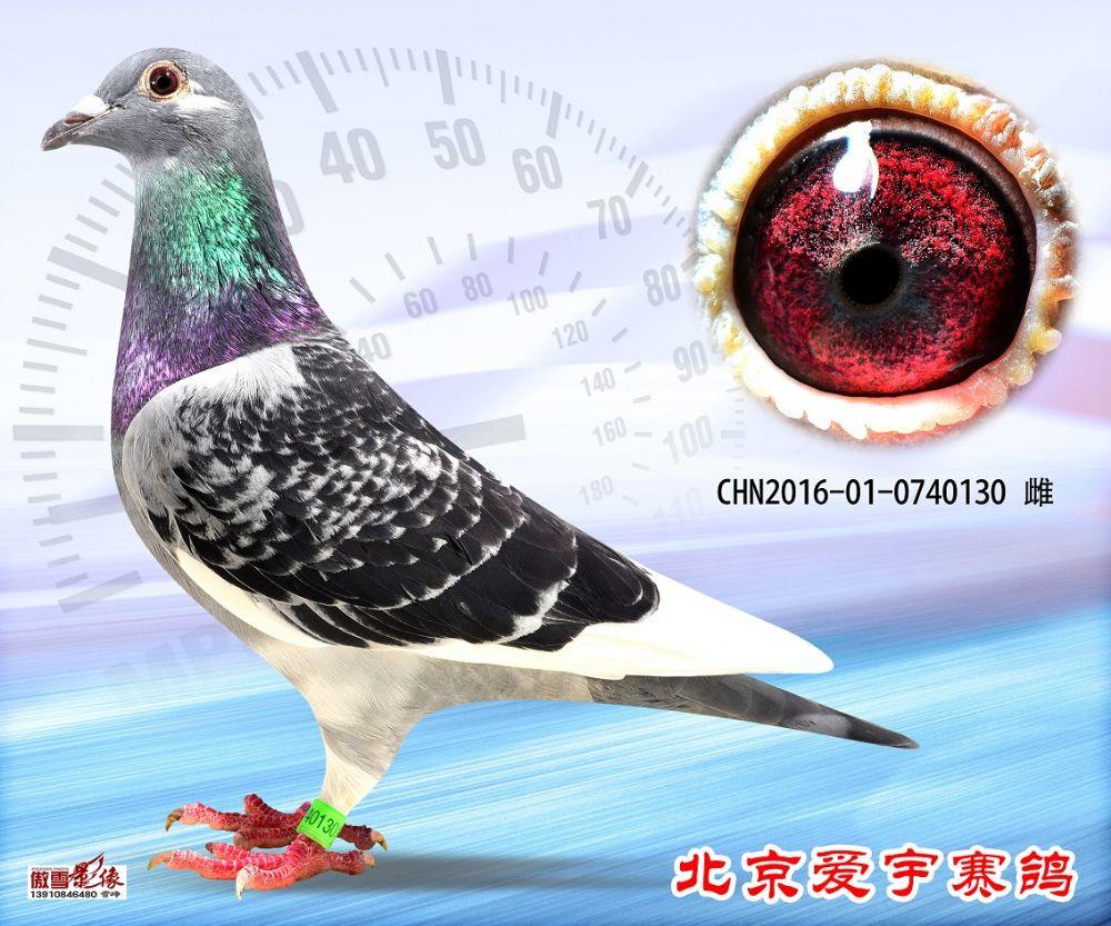 23、CHN2016-01-0740130-雌副本 (1)