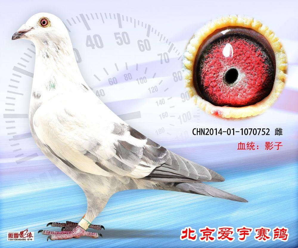 27、CHN2014-01-1070752-雌副本 (1)