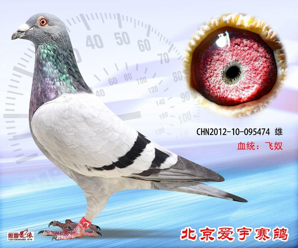 31、CHN2012-10-095474-雄副本 (1)
