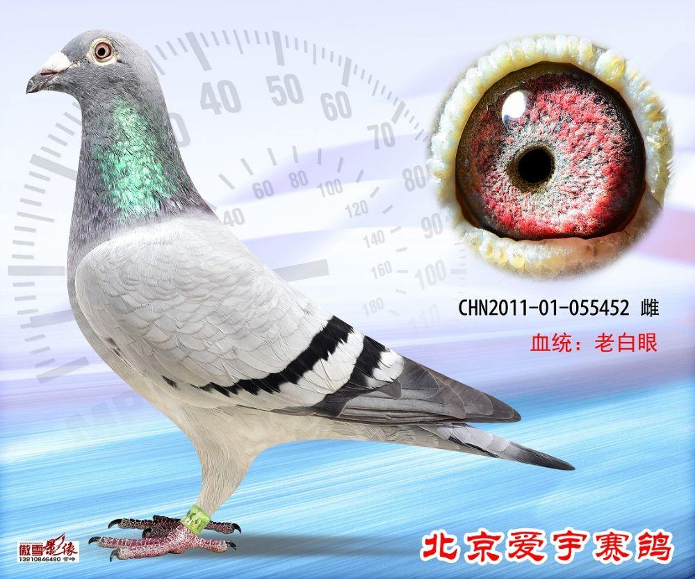 32、CHN2011-01-055452-雌副本 (1)