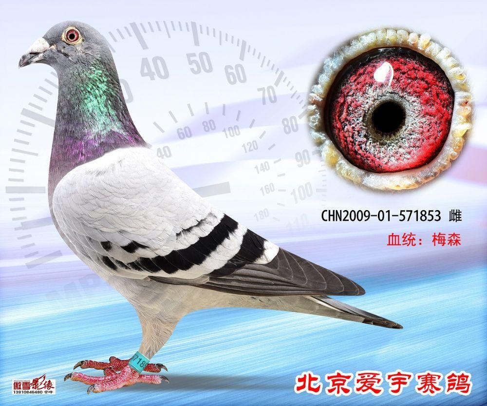 25、CHN2009-01-571853-雌副本 (1)