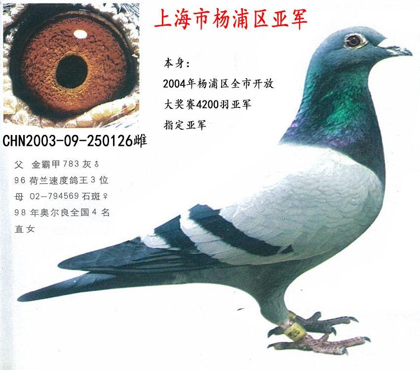 上海市杨浦区亚军