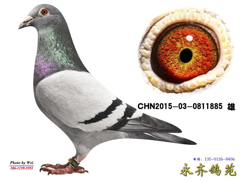 CHN2015-03-0811885