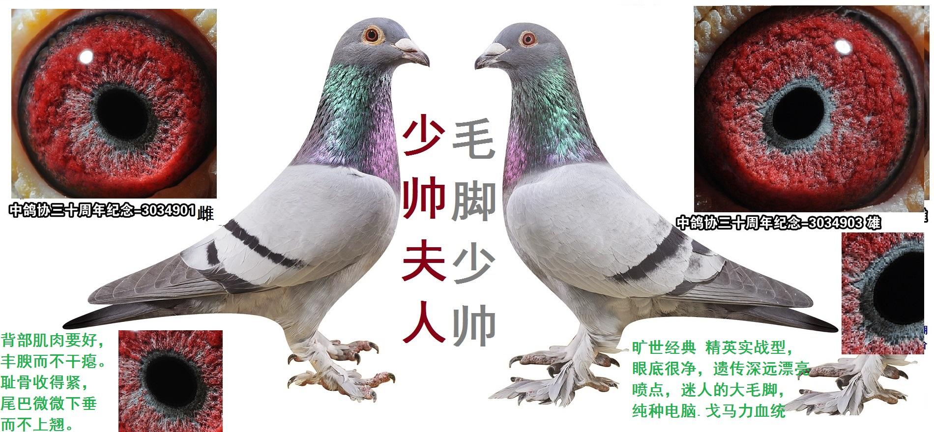 戈马力★大毛脚