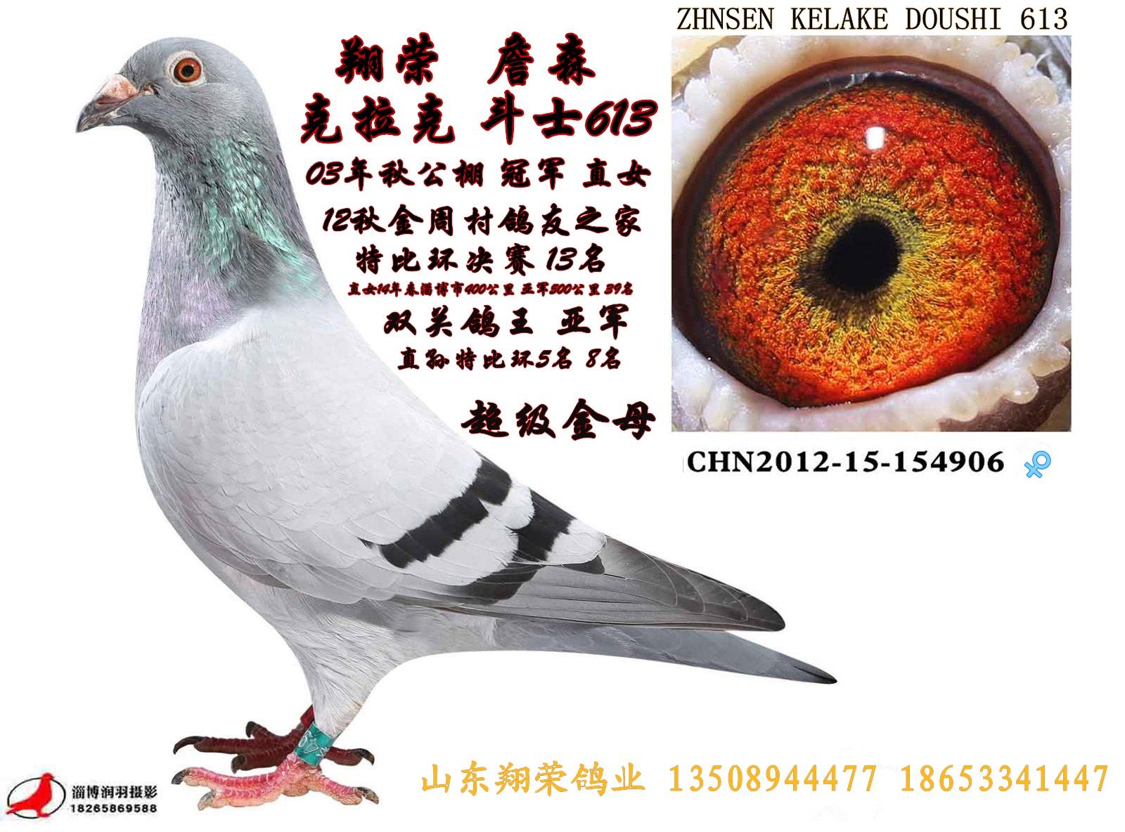 詹森 克拉克_山东翔荣鸽业-中信网爱鸽商城