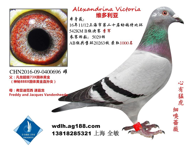 维多利亚的秘密 已转鸽友收藏