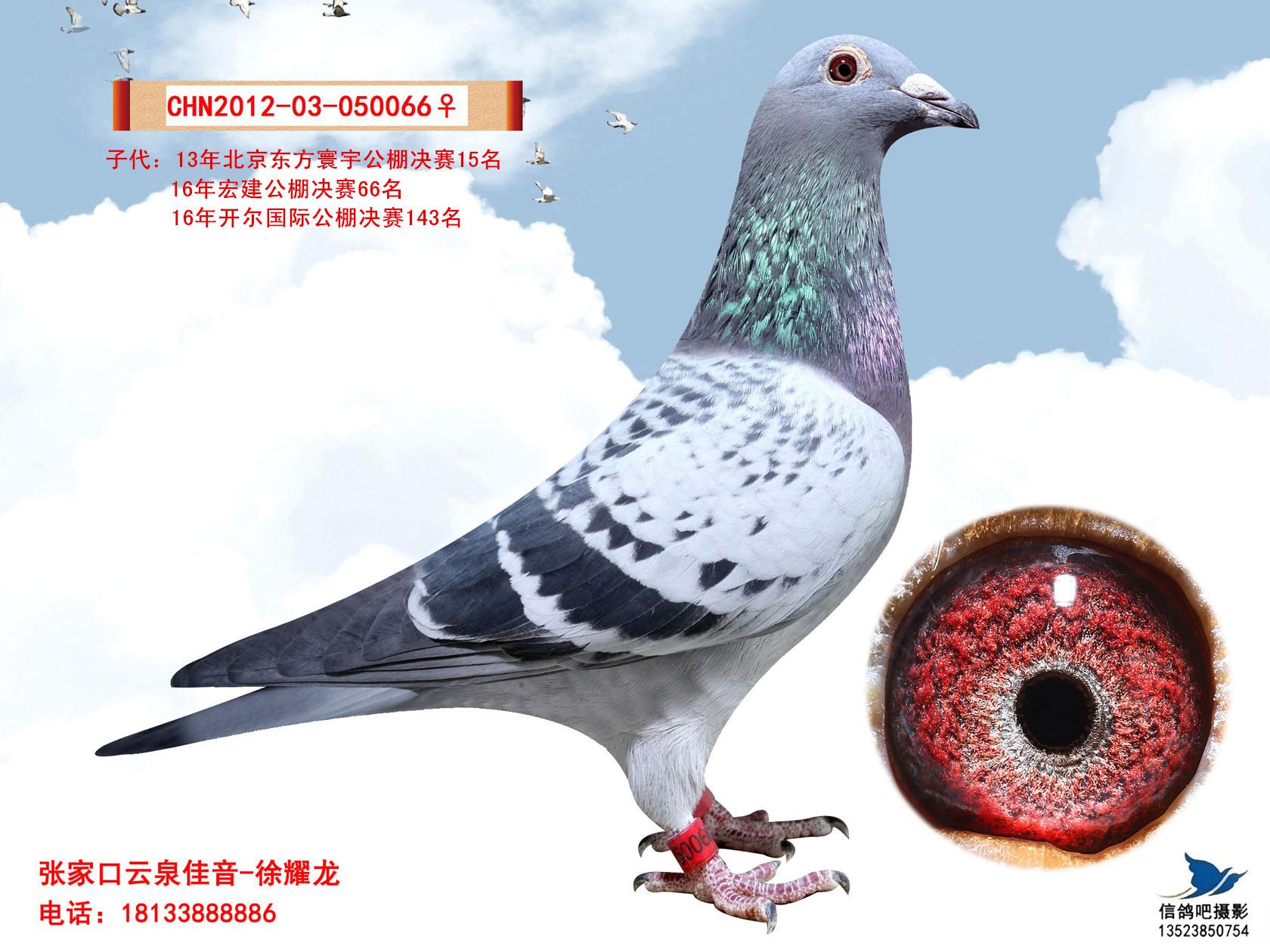 詹森919_云泉佳音-中信网爱鸽商城